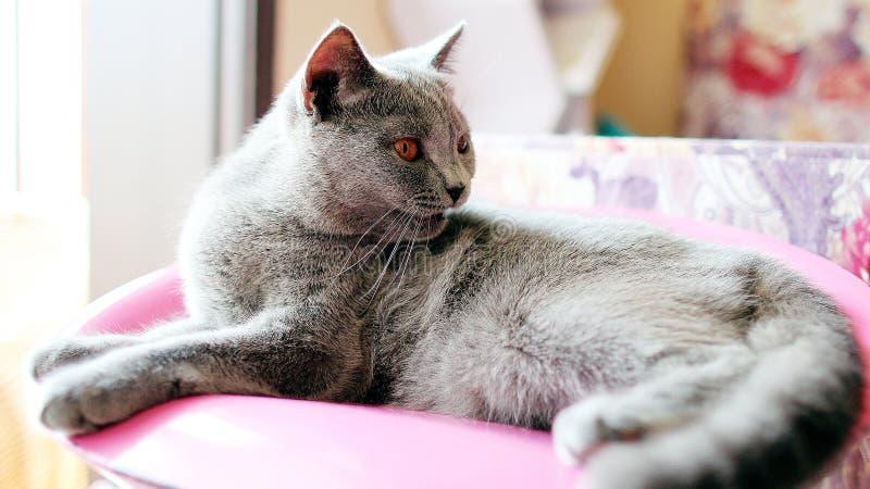 [Katze] Patrouille 12-11 lizenzfreie stockfotos