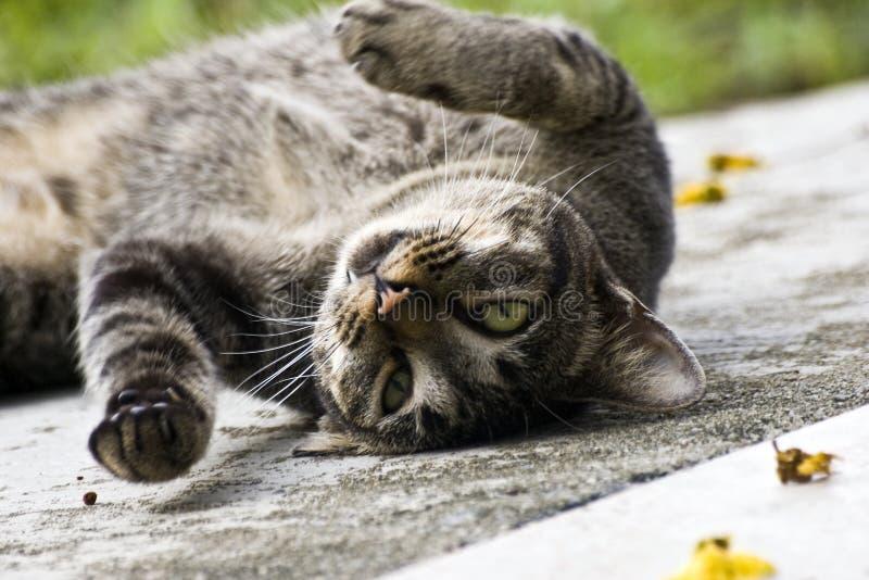 Katze-Rollen stockbilder