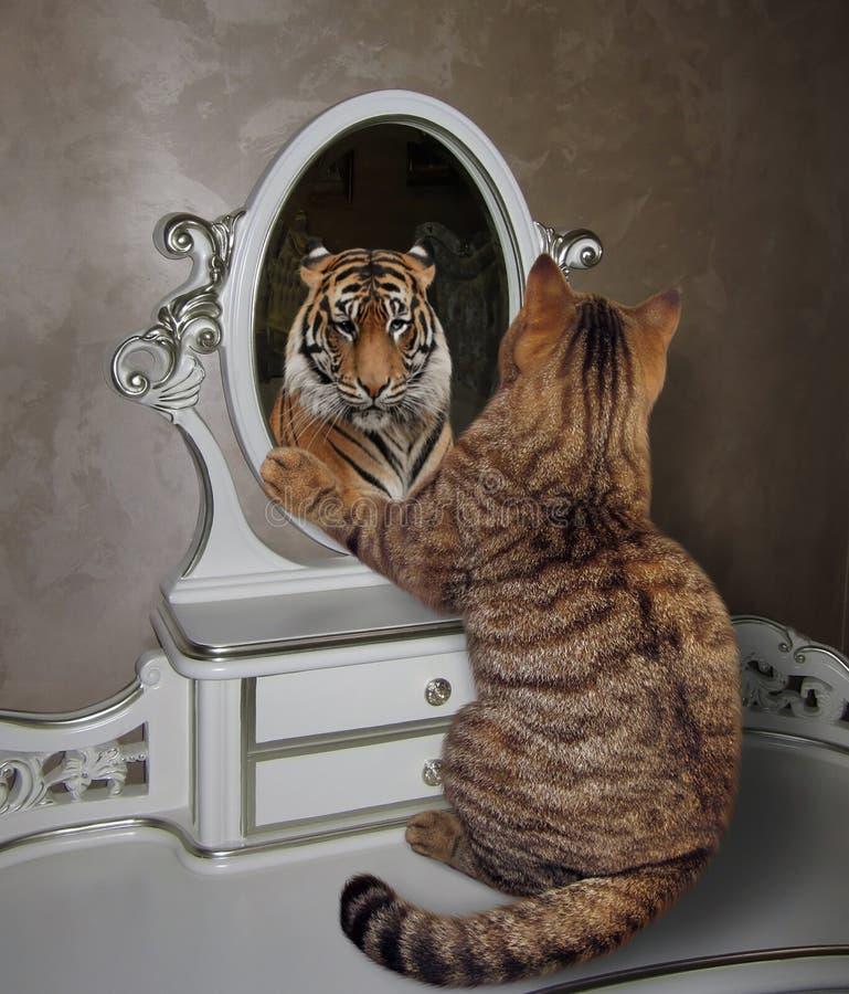 Katzen Spiegel