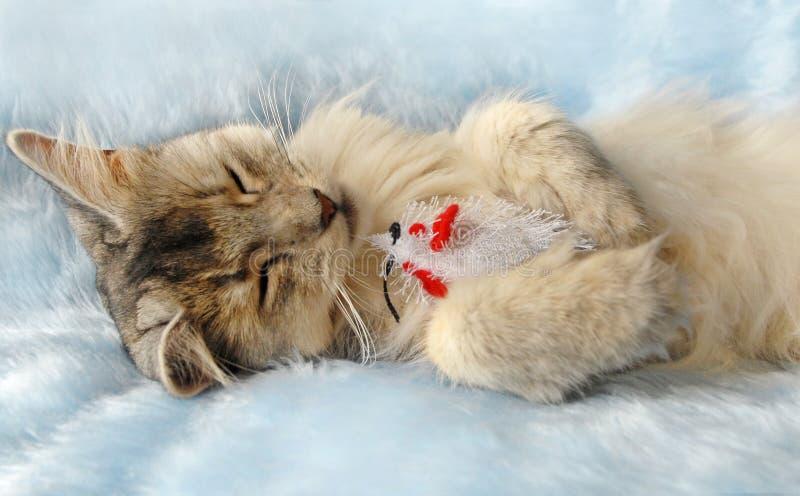 Katze schläft, eine Spielzeugmaus anhalten lizenzfreie stockfotografie