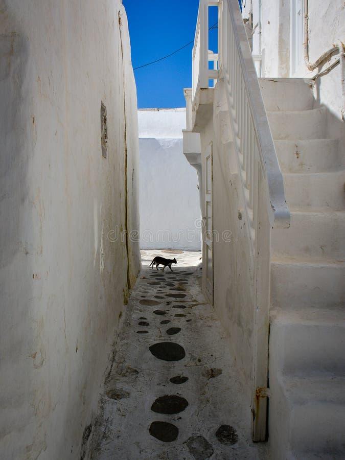 Katze schlicht sich ein stockbilder
