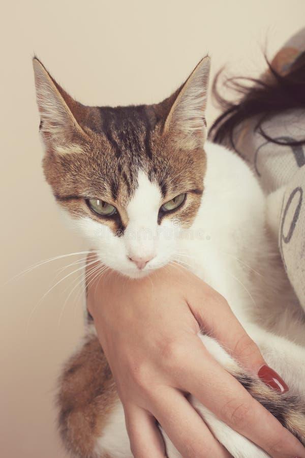 Katze sitzt auf den Händen der Hauswirtin lizenzfreie stockfotografie
