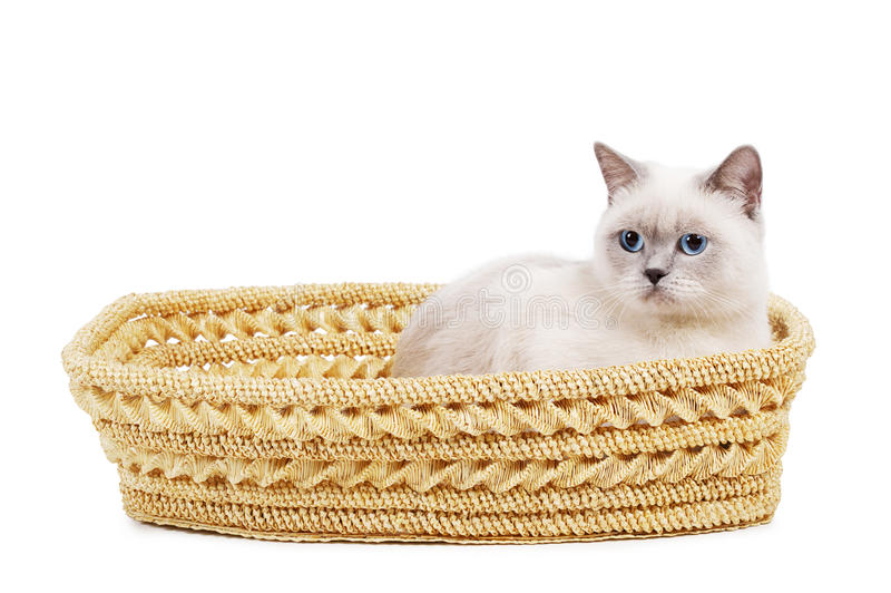 Katze sitzt im Korb lizenzfreies stockfoto