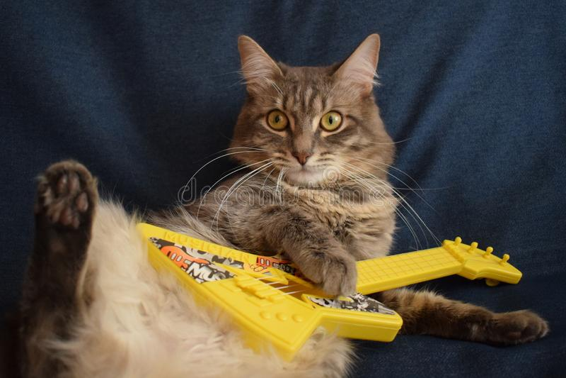 Katze spielt eine Spielzeuggitarre stockfoto