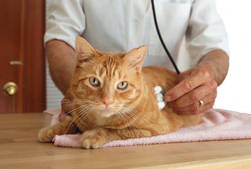 Katze am Tierarzt stockbild