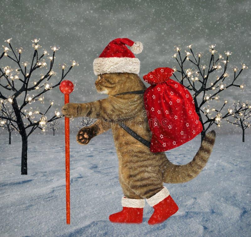 Katze trägt Weihnachtsgeschenke lizenzfreie abbildung
