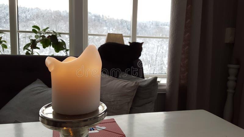 Katze u. Kerze stockfotos
