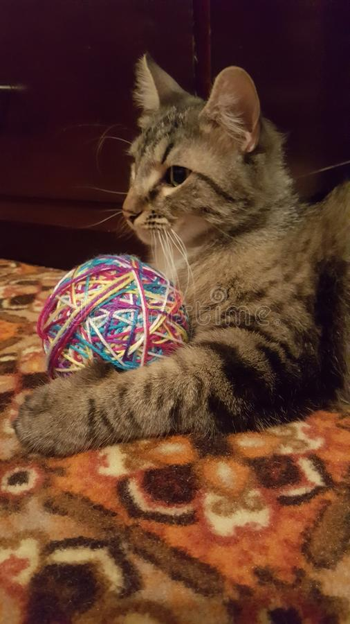 Katze u. sein Ball lizenzfreies stockfoto