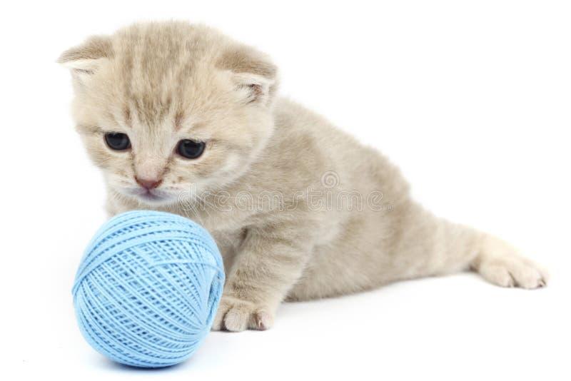Katze und blauer Wollball lizenzfreie stockfotos