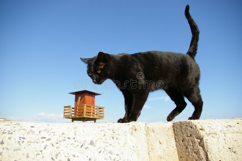 Katze und das Haus lizenzfreies stockbild