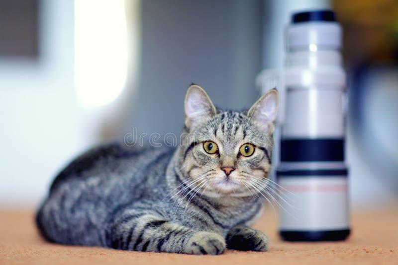 Katze und die Kameraobjektiv- und Berufswild lebenden tiere stockfoto