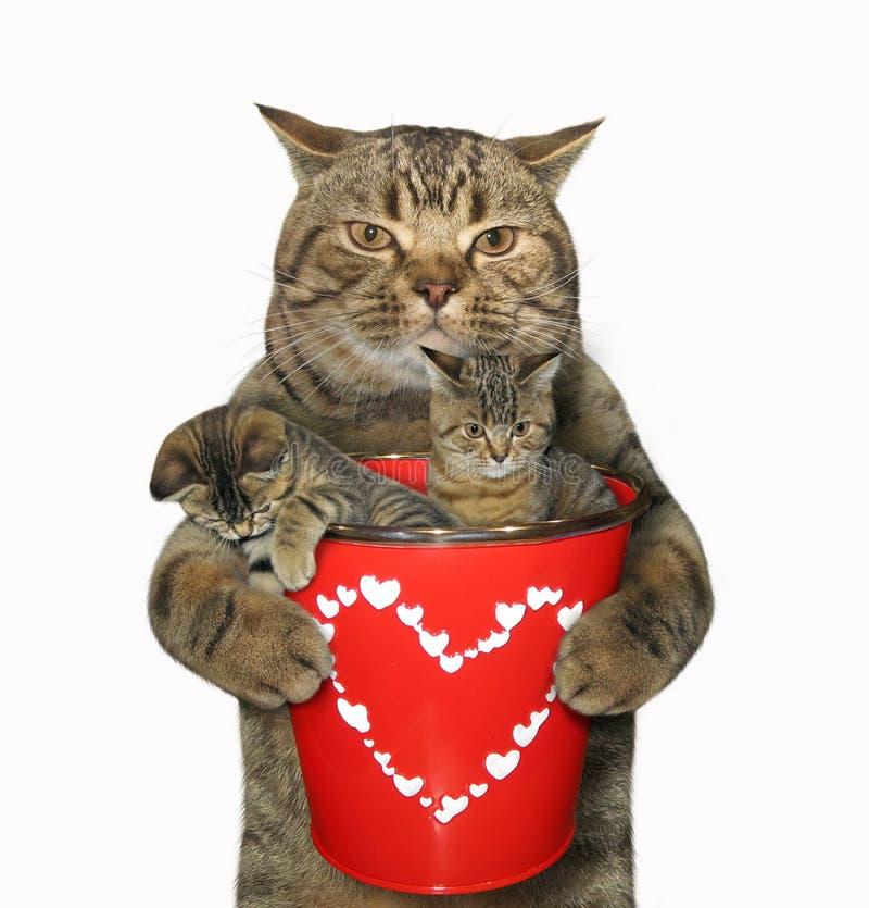 Katze und Eimer mit Kätzchen stockfoto