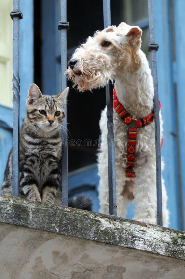 Katze und ein Hund stockfotos