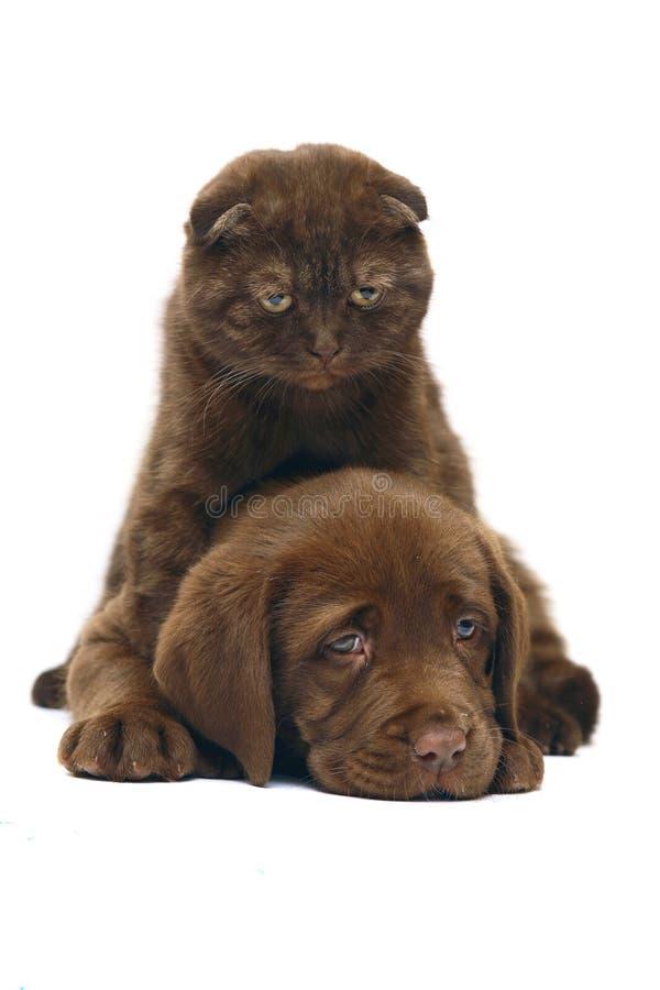 Katze und ein Hund. stockbild