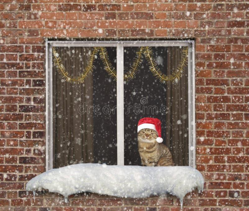 Katze und Fenster 2 stockfotos