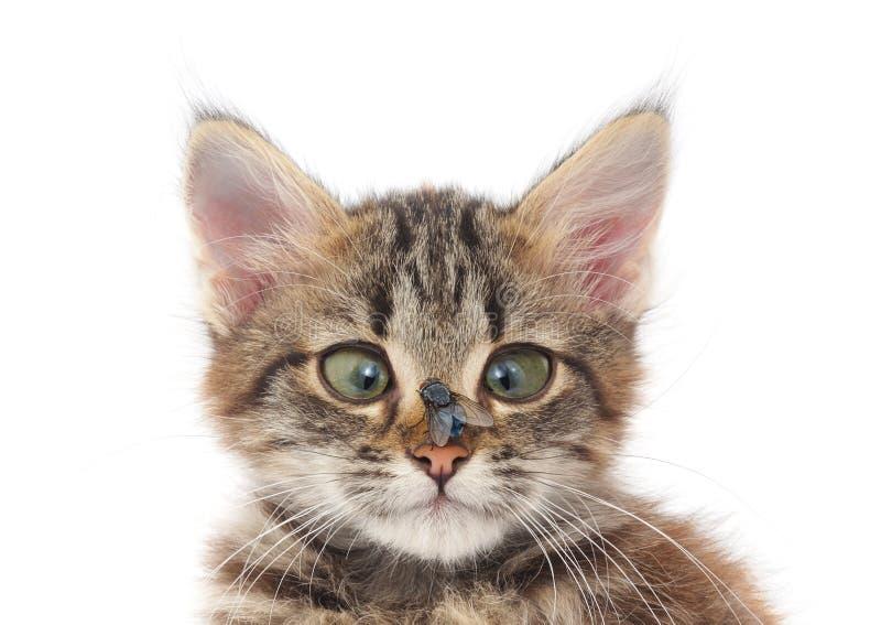 Katze und Fliege stockfotos