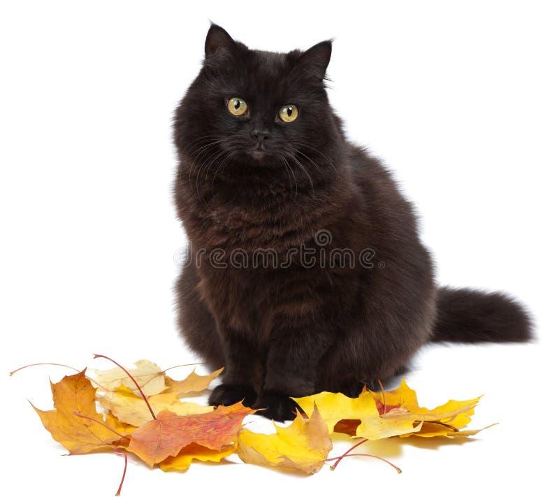 Katze und Herbst getrennt stockfoto