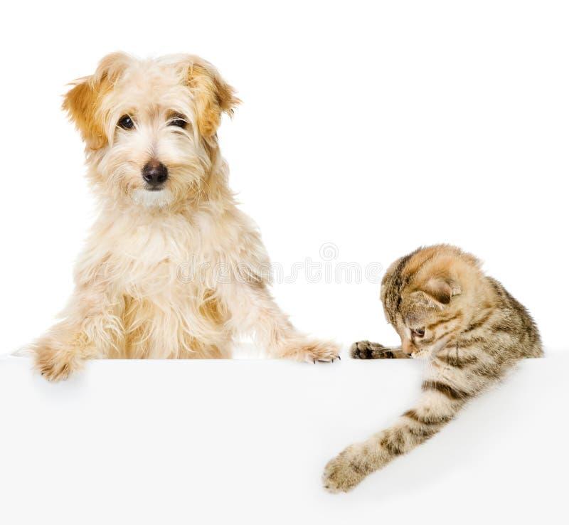 Katze und Hund über der weißen Fahne, die Kamera betrachtet. lizenzfreies stockfoto