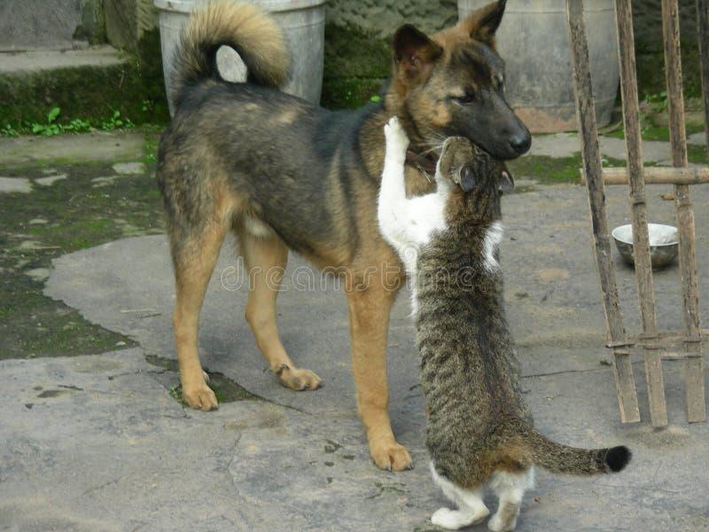 Katze und Hund stockbild