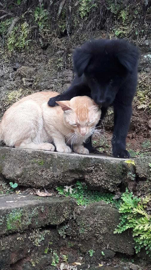 Katze und Hund lizenzfreies stockfoto
