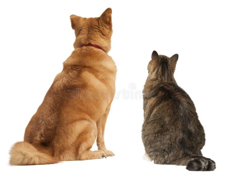 Katze und Hund, die oben schauen lizenzfreies stockbild