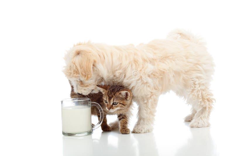 Katze und Hund, die zusammen speisen lizenzfreie stockfotografie