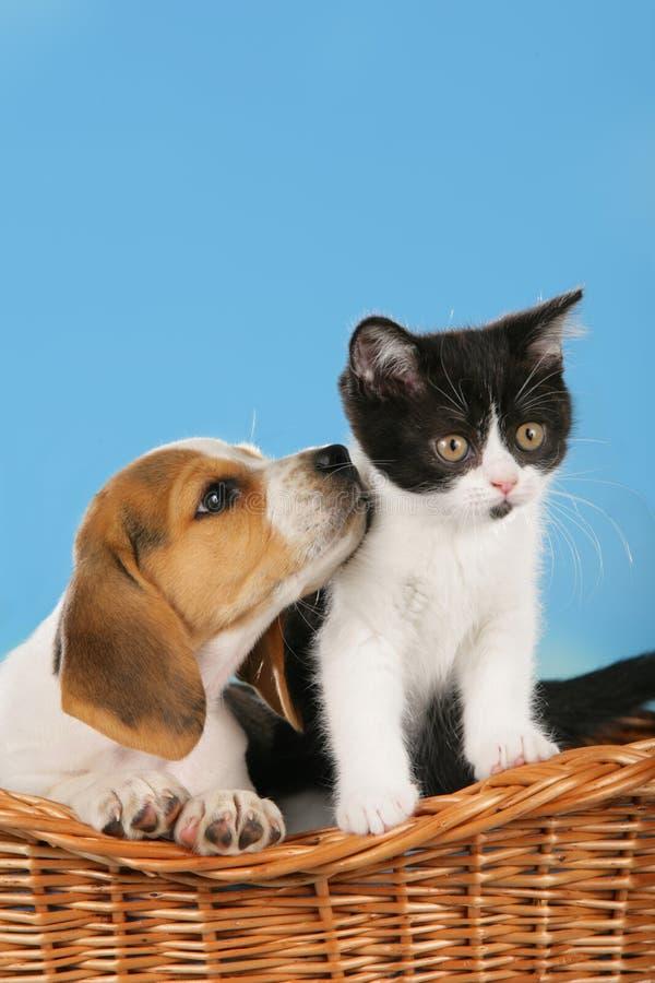 katze und hund in einem korb stockfoto  bild von katze