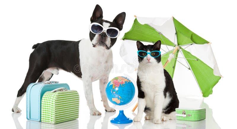 Katze und Hund am Feiertag lizenzfreies stockbild