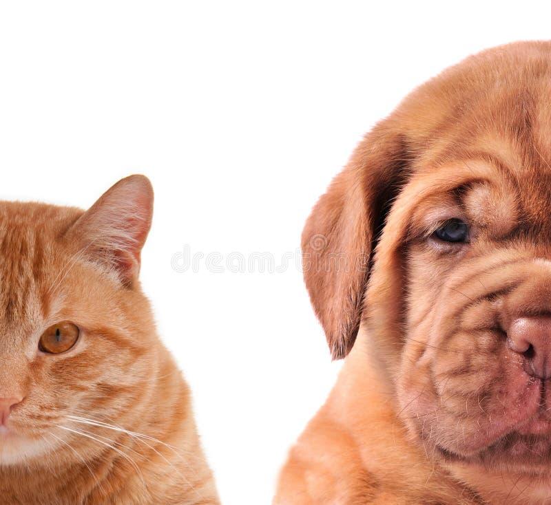 Katze und Hund-Hälfte der Mündungsnahaufnahmeportraits lizenzfreies stockbild
