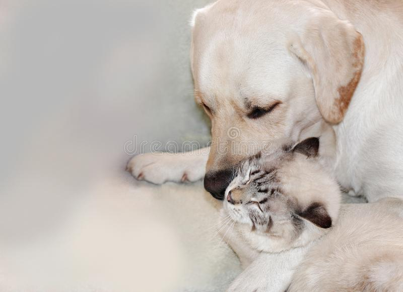 Katze und Hund sind große Freunde lizenzfreie stockbilder