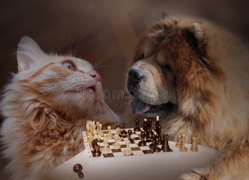 Katze und Hund spielen ein Schach