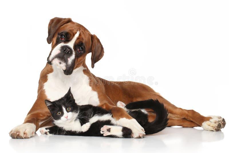 Katze und Hund zusammen stockfotografie