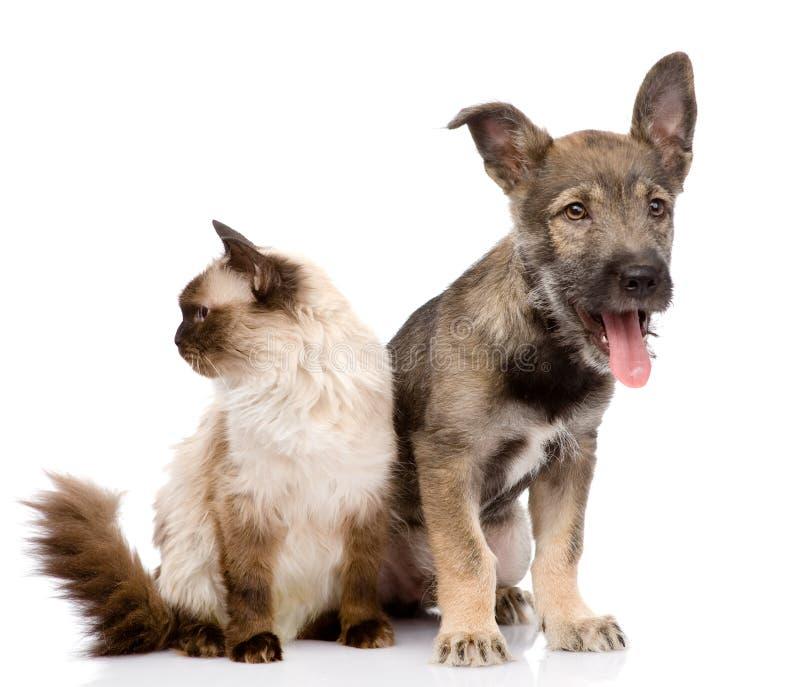 Katze und Hund zusammen konzentriert auf die Katze Lokalisiert auf Weiß stockbild