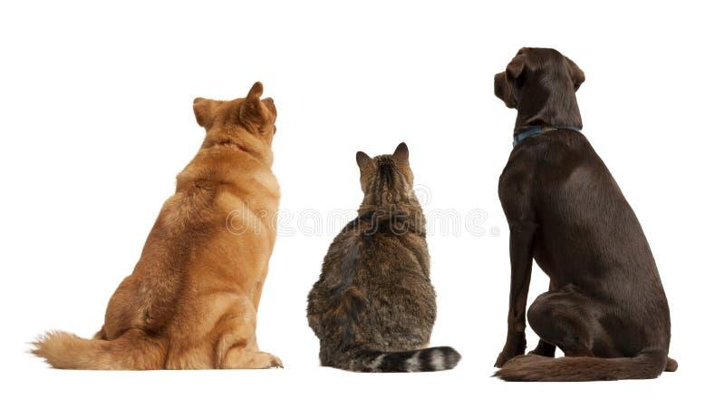 Katze und Hunde, die oben schauen lizenzfreie stockfotos