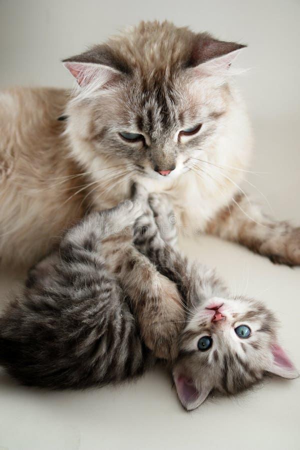 Katze und ihr Kätzchen stockfotografie