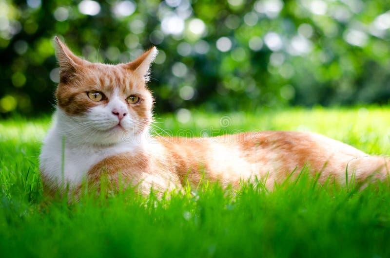 Katze und Inneres stockfotografie