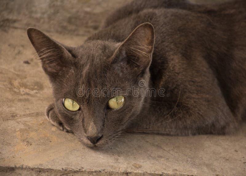 Katze und Inneres lizenzfreies stockfoto