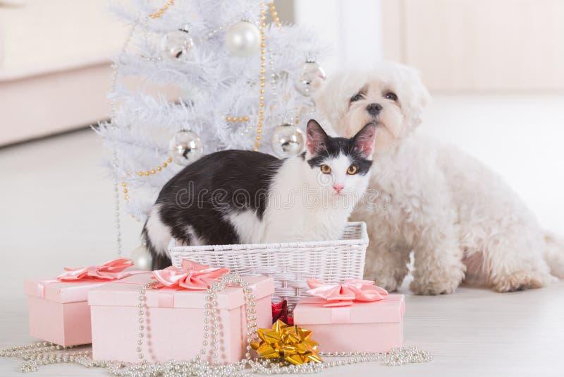 Katze und kleiner Hund, die zusammen nahe Weihnachtsbaum sitzen stockfoto
