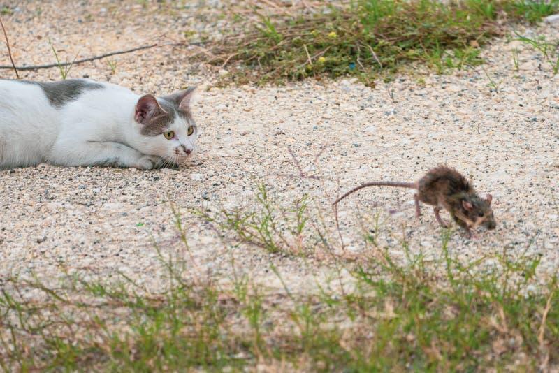 katze und maus in der natur stockbild  bild von natur