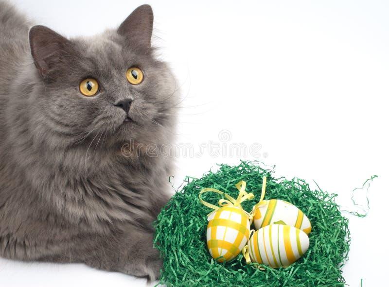 Katze und Ostereier stockfotografie