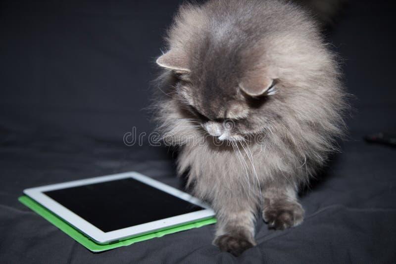 Katze und Tablet-Computer stockbild