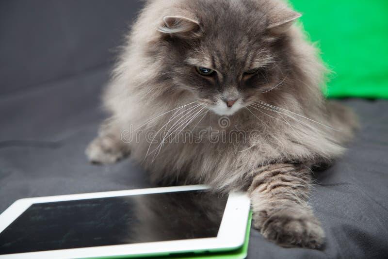 Katze und Tablet-Computer lizenzfreies stockbild