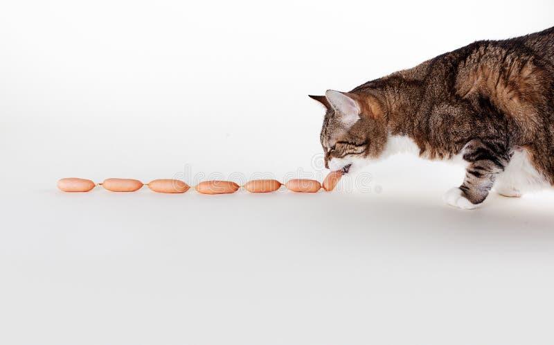 Katze und Würste stockbilder