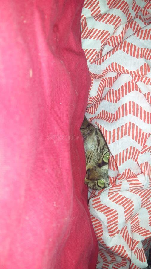 Katze unter Decke stockfotos