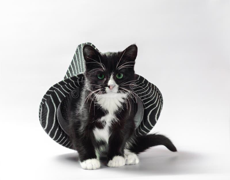 Katze unter Hutschwarzkätzchen mit den weißen Tatzen mit gestreiften headdres stockbilder