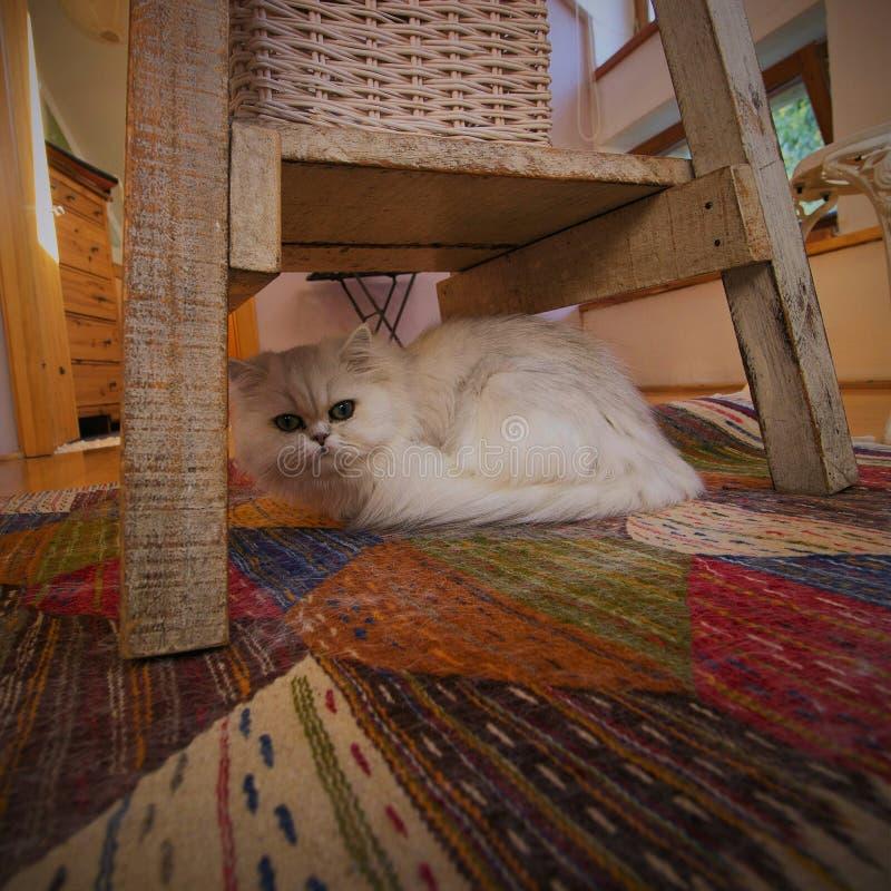 Katze unter Stuhl lizenzfreies stockbild
