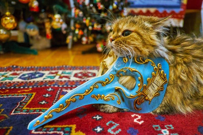 Katze in Venedig-Maske lizenzfreie stockfotos