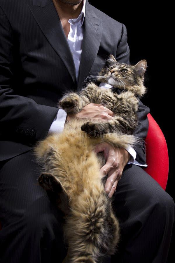 Katze verantwortlich lizenzfreies stockfoto