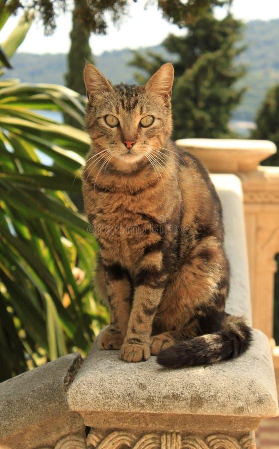 Katze von Dubrovnik lizenzfreie stockfotografie