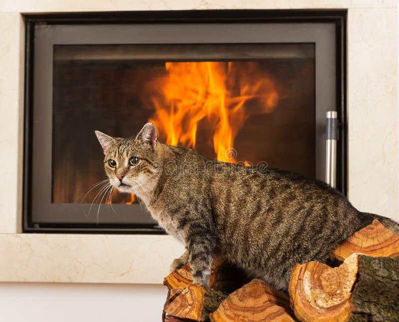 Katze Vor Dem Fernseher Bild: Katze Vor Kamin Stockfoto. Bild Von Brennen, Inländisch